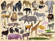 Wild Animals Thirty-Six Animals Puzzle additional picture 1
