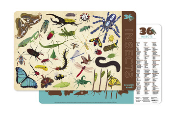 Insects Two-Sided Placemat picture