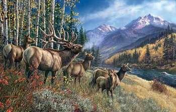 Elk Anthem picture