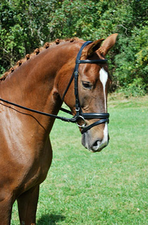 RED BARN TRAVERS DRESSAGE BRIDLE picture