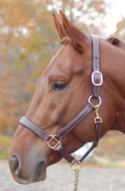 RED BARN LAINIE HALTER picture