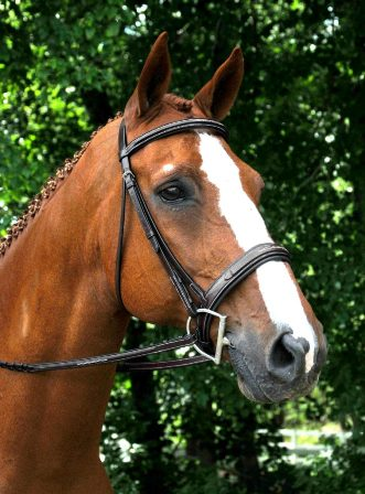 RED BARN TRYON NOSEBAND picture