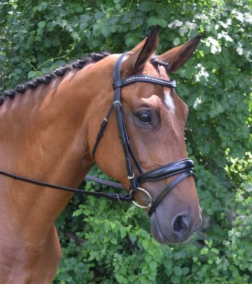 RED BARN TOPLINE DRESSAGE BRIDLE picture