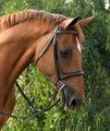 RED BARN ICON HUNTER BRIDLE