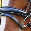RED BARN CADENCE DRESSAGE BRIDLE additional picture 2