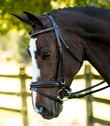 KL ITALIA PIROUETTE DRESSAGE BRIDLE additional picture 2