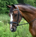 RED BARN PACE DRESSAGE BRIDLE