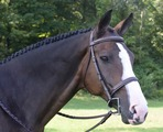 BLACK OAK SPRUCE HUNTER BRIDLE