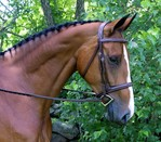 RED BARN SYNERGY HUNTER BRIDLE