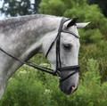 RED BARN PACE PATENT DRESSAGE BRIDLE