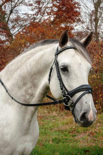 RED BARN PIAFFE DRESSAGE BRIDLE picture