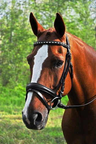 RED BARN CADENCE DRESSAGE BRIDLE picture