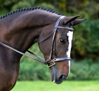 RED BARN TUSCANY HUNTER BRIDLE picture
