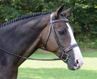 Kl Select Red Barn Sonoma Hunter Bridle