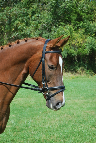 RED BARN LEVADE DRESSAGE BRIDLE picture
