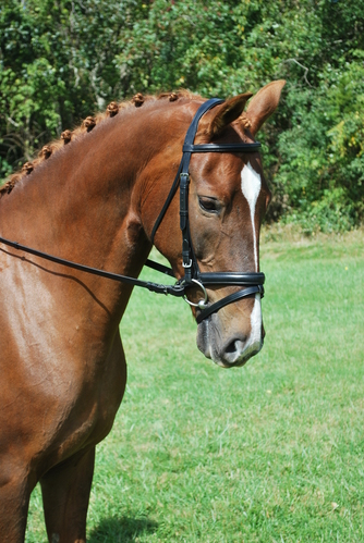RED BARN TRAVERS NOSEBAND picture