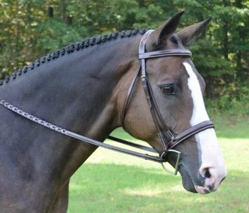 RED BARN SPIRIT HUNTER BRIDLE picture