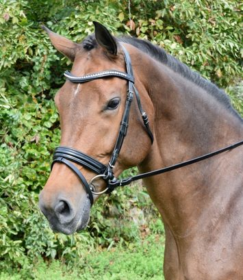 KL ITALIA PRIX DRESSAGE BRIDLE picture