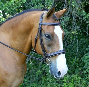 RED BARN OCALA HUNTER BRIDLE picture