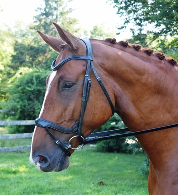 RED BARN ARENA ANATOMICAL DRESSAGE BRIDLE picture