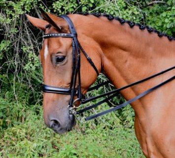 RED BARN CADENCE WEYMOUTH DRESSAGE BRIDLE picture