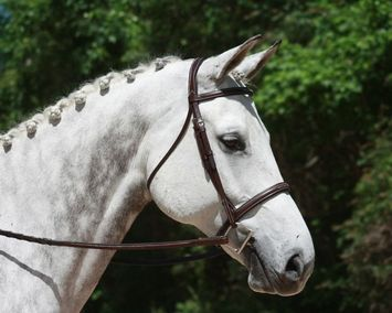 RED BARN SYNERGY UNI-CROWN NOSEBAND picture