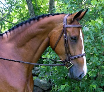 RED BARN SYNERGY UNI-CROWN HUNTER BRIDLE picture