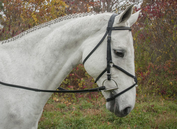 RED BARN PHOENIX EVENTING BRIDLE picture