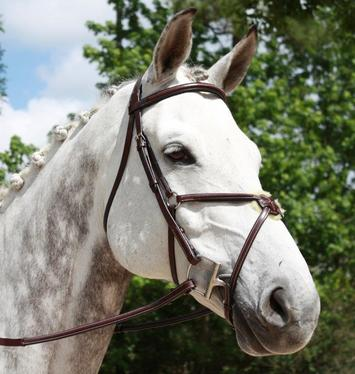 RED BARN EQUINOX EVENTING BRIDLE picture