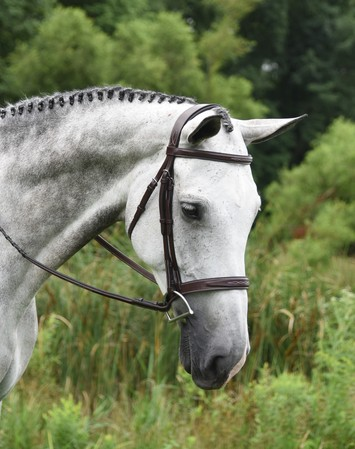 RED BARN INDIO HUNTER BRIDLE picture