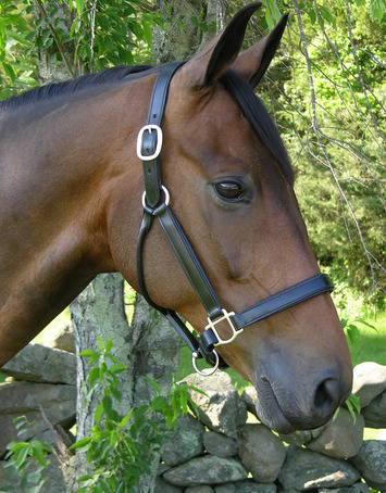 BLACK OAK SYCAMORE HALTER picture
