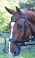 RED BARN CURVED ARENA BROWBAND