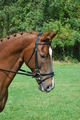 RED BARN LEVADE DRESSAGE BRIDLE