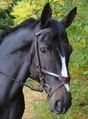 KL ITALIA CHASE EVENTING BRIDLE