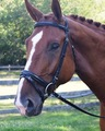 BLACK OAK JUNIPER DRESSAGE BRIDLE